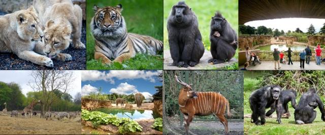 Dublin Zoo Conposite